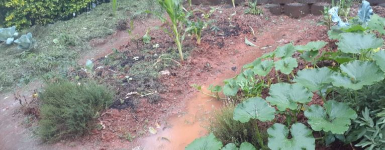Bringing your garden back to life after heavy rains